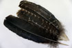 12 Spanish Black Secondary Wing Feathers Grade #2
